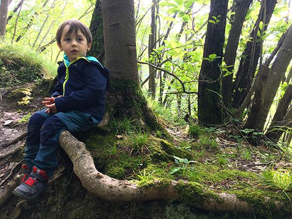 bambino albero bosco