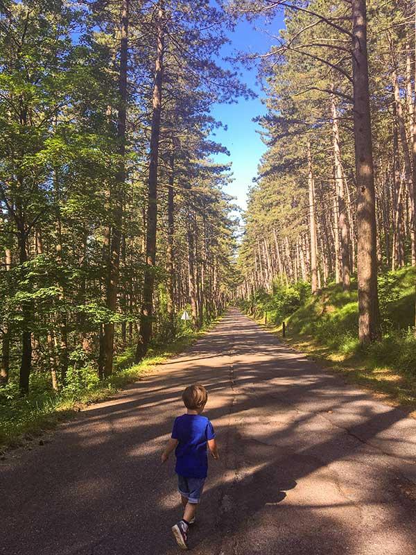 bambino corre pineta foliage in liguria