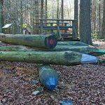 lago delle lame museo del bosco