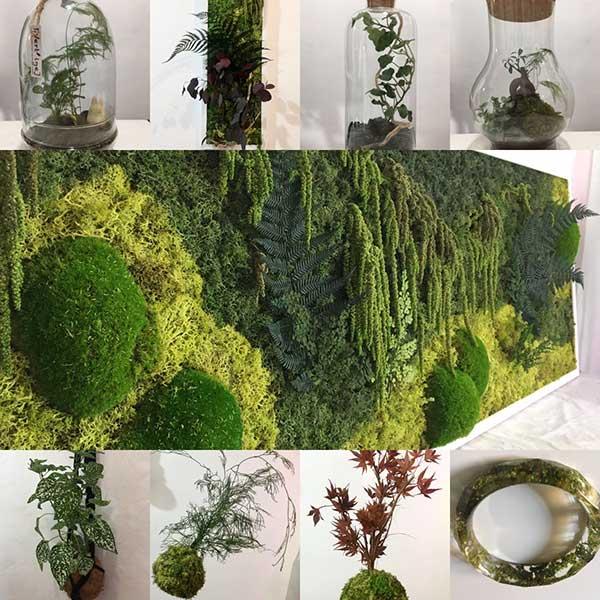 regali liguria piante