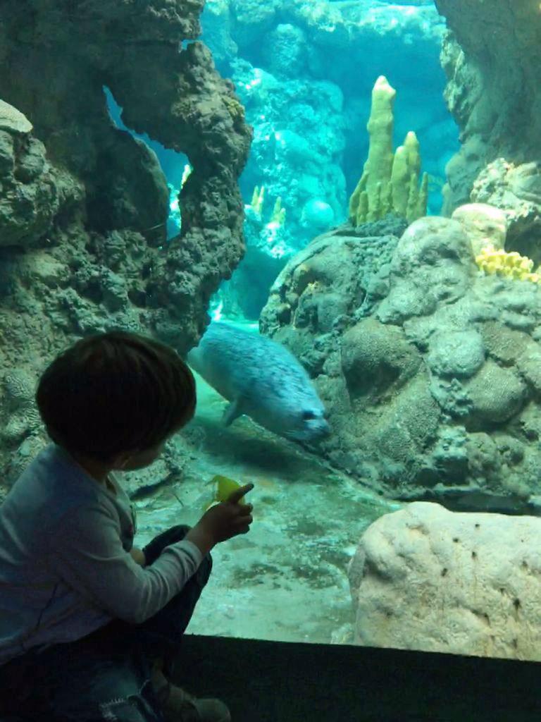 bambino e foca