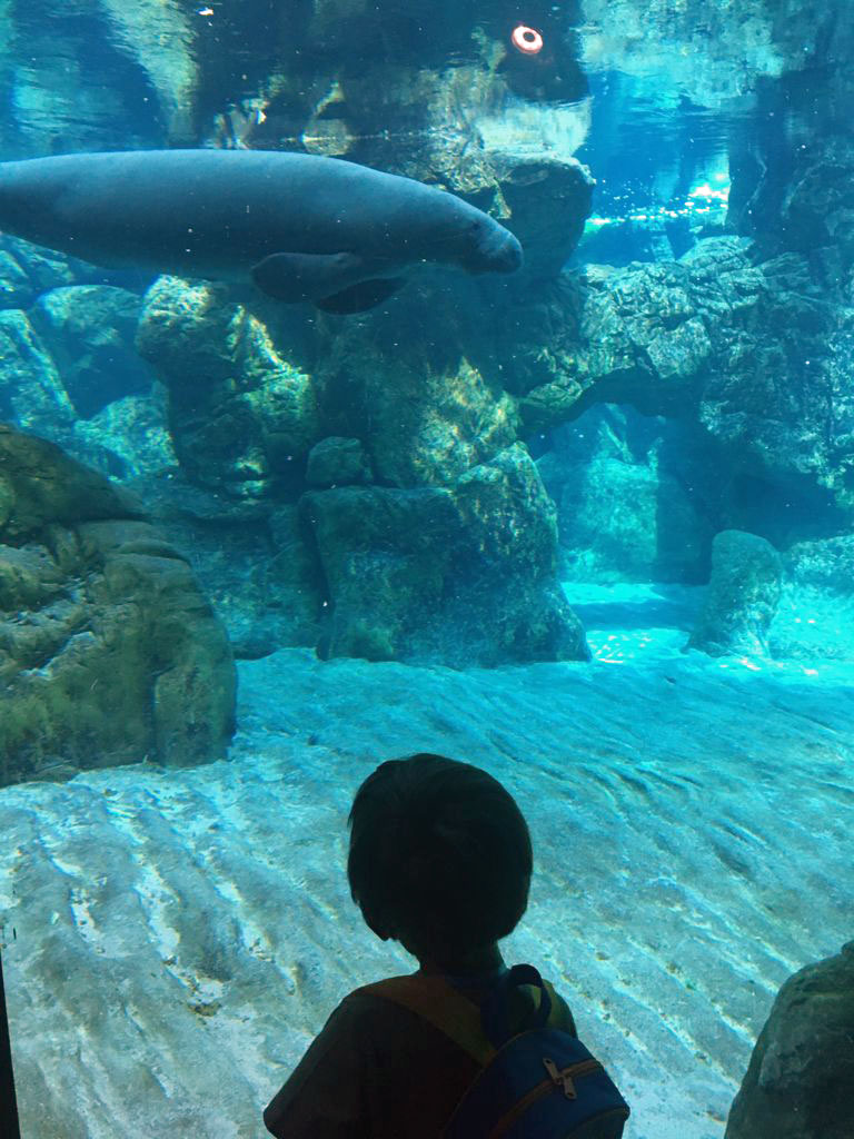 acquario di genova lamantini