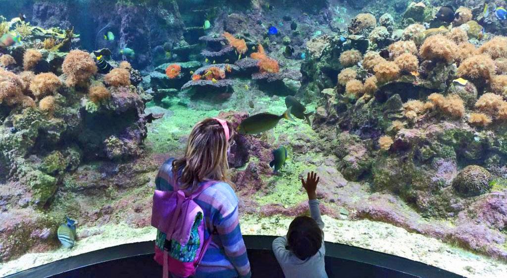 acquario di genova coralli
