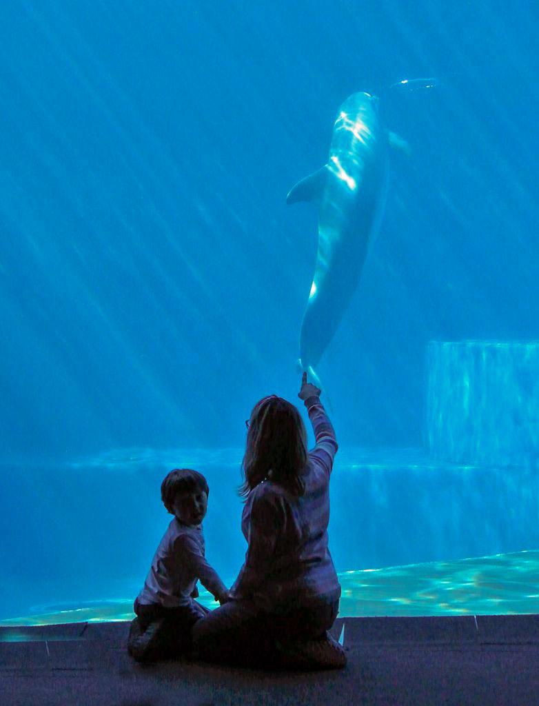 acquario di genova delfini