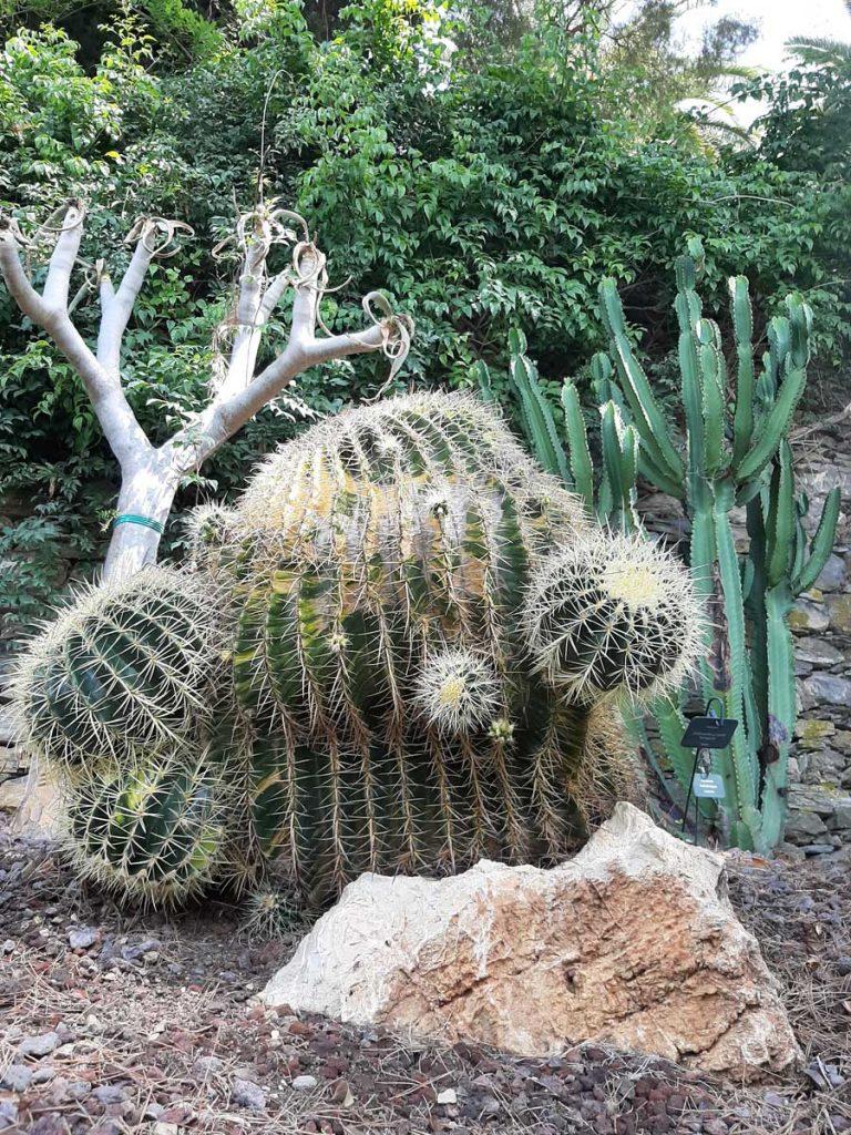 cactus alassio